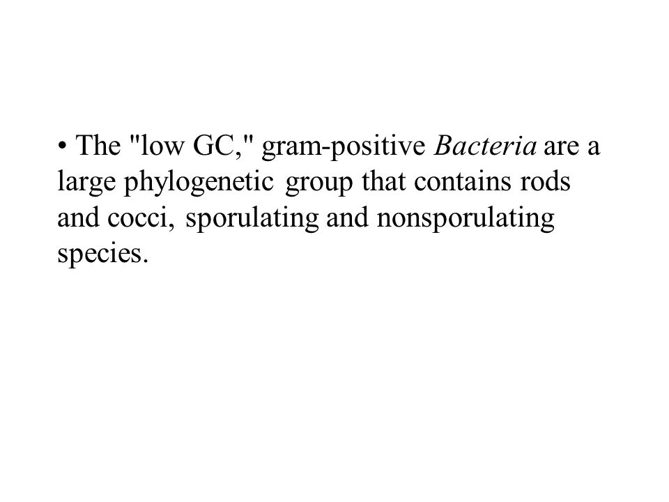 The low GC, gram-positive Bacteria are a large phylogenetic group that contains rods and cocci, sporulating and nonsporulating species.