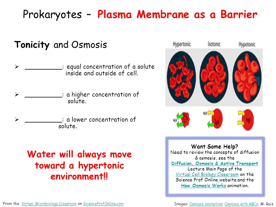 Prokaryotes – Plasma Membrane as a Barrier Tonicity and Osmosis  __________: equal concentration of a solute inside and outside of cell.