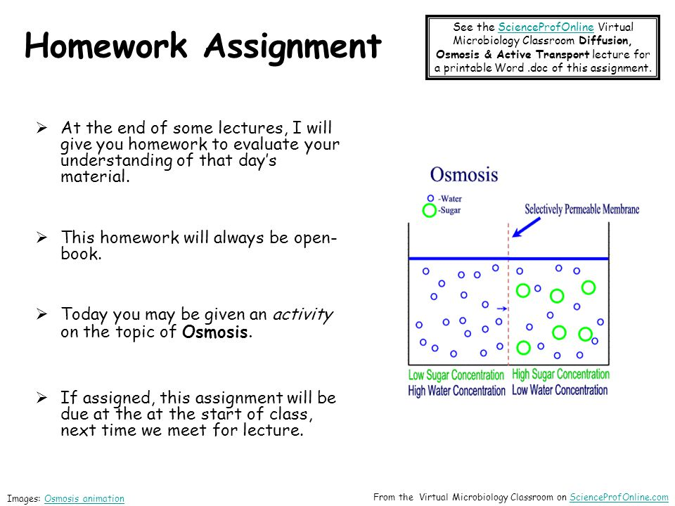 Homework Assignment  At the end of some lectures, I will give you homework to evaluate your understanding of that day's material.