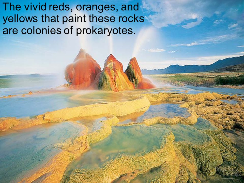 The vivid reds, oranges, and yellows that paint these rocks are colonies of prokaryotes.