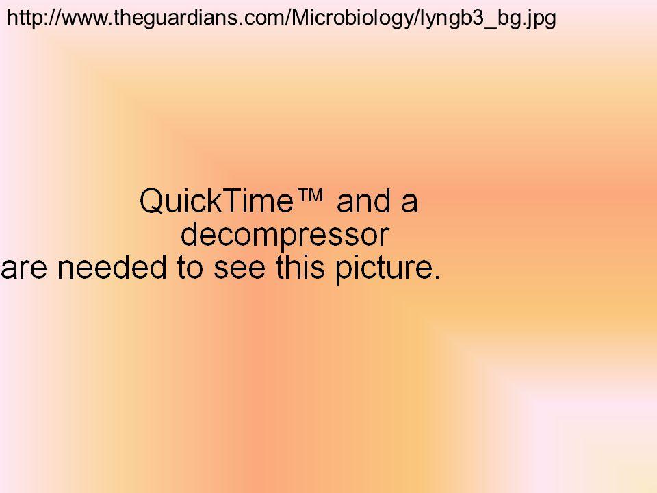 http://www.theguardians.com/Microbiology/lyngb3_bg.jpg