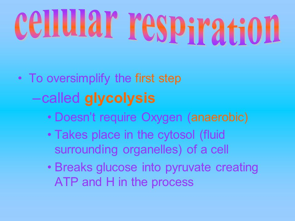 To oversimplify the first step –called glycolysis Doesn't require Oxygen (anaerobic) Takes place in the cytosol (fluid surrounding organelles) of a ce