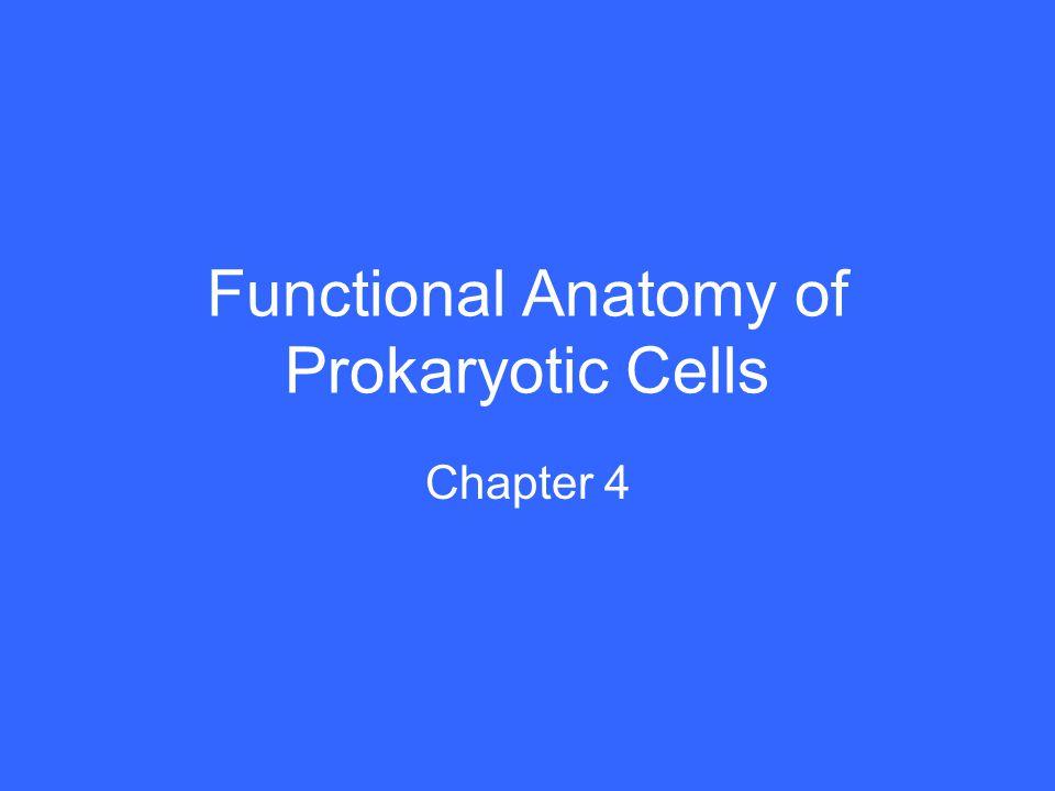 Functional Anatomy of Prokaryotic Cells Chapter 4