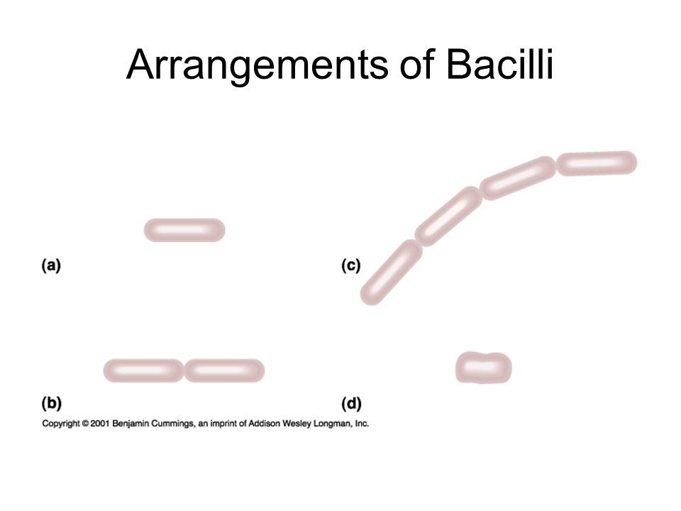 Arrangements of Bacilli