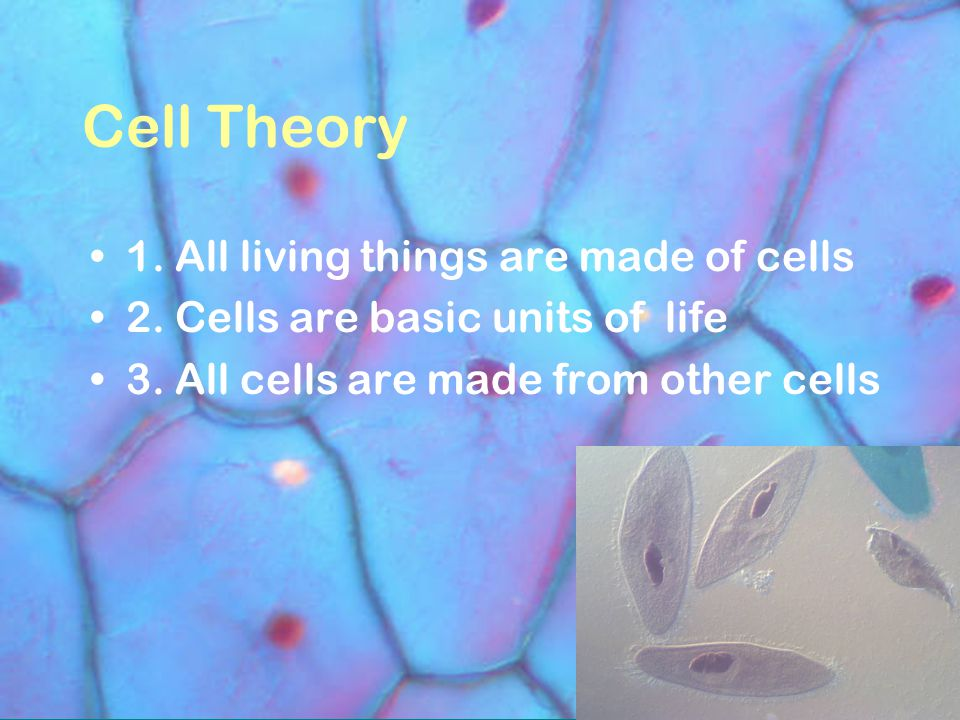 Cell Theory 1. All living things are made of cells 2.