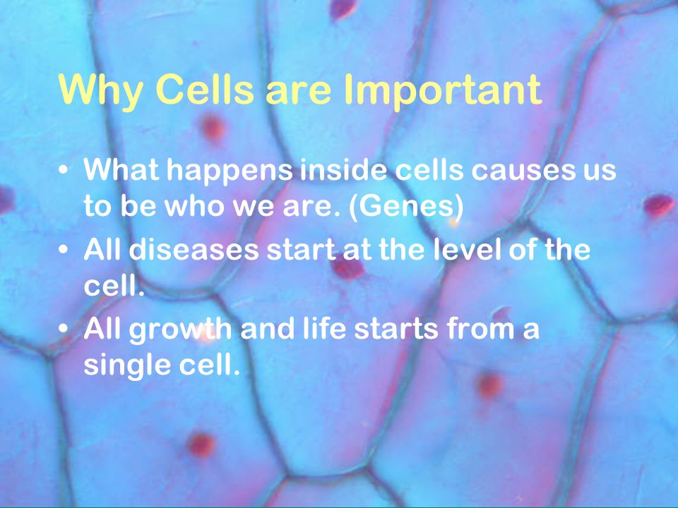 Why Cells are Important What happens inside cells causes us to be who we are.