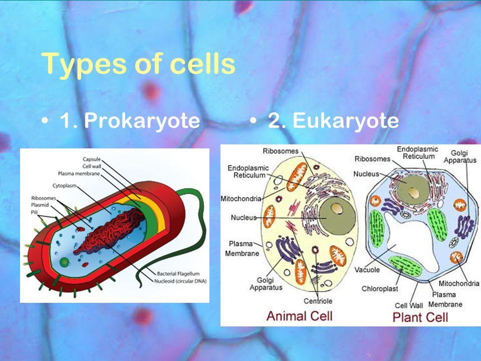 Types of cells 1. Prokaryote2. Eukaryote