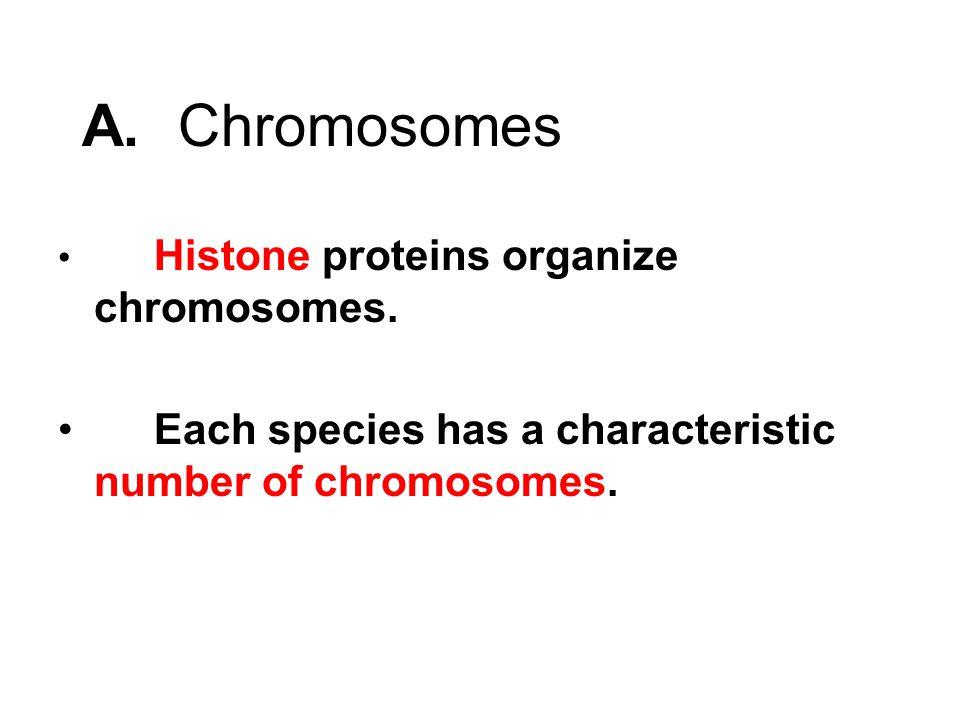 A.Chromosomes Histone proteins organize chromosomes.