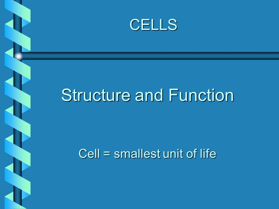 Functions of Eukaryotic Cell Features StructureFunction(s) Cytoskeleton 1.Maintains cell shape 2.Anchors organelles and proteins 3.Allows for organelle movement and cellular movement in some cell types