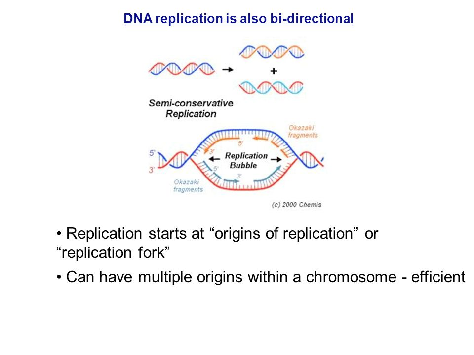DNA replication is also bi-directional Replication starts at origins of replication or replication fork Can have multiple origins within a chromosome - efficient
