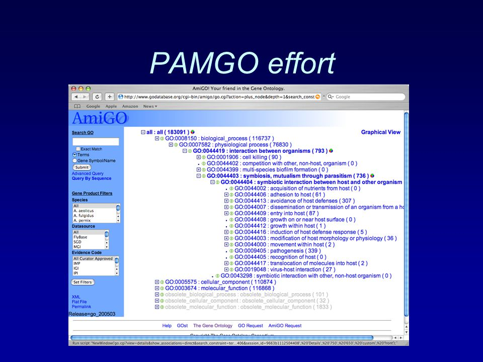 PAMGO effort