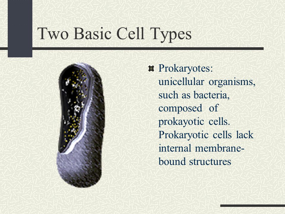 Two Basic Cell Types Prokaryotes: unicellular organisms, such as bacteria, composed of prokayotic cells.