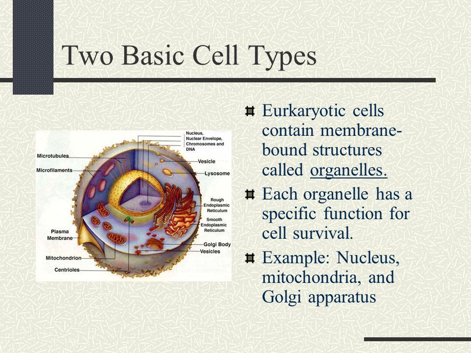 Two Basic Cell Types Eurkaryotic cells contain membrane- bound structures called organelles.