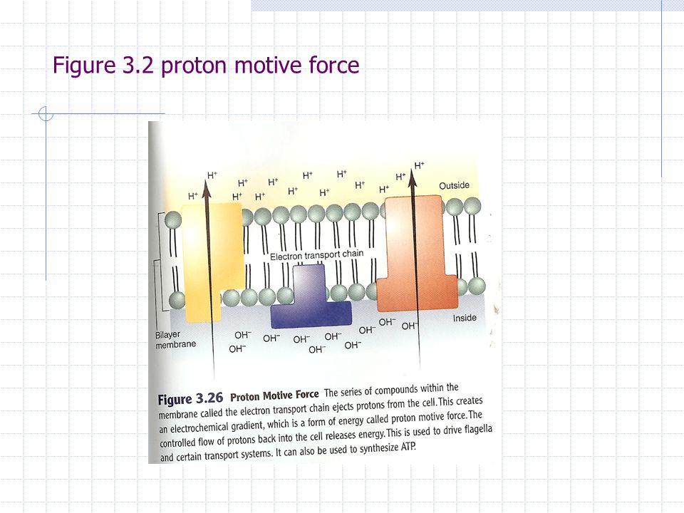 Figure 3.2 proton motive force