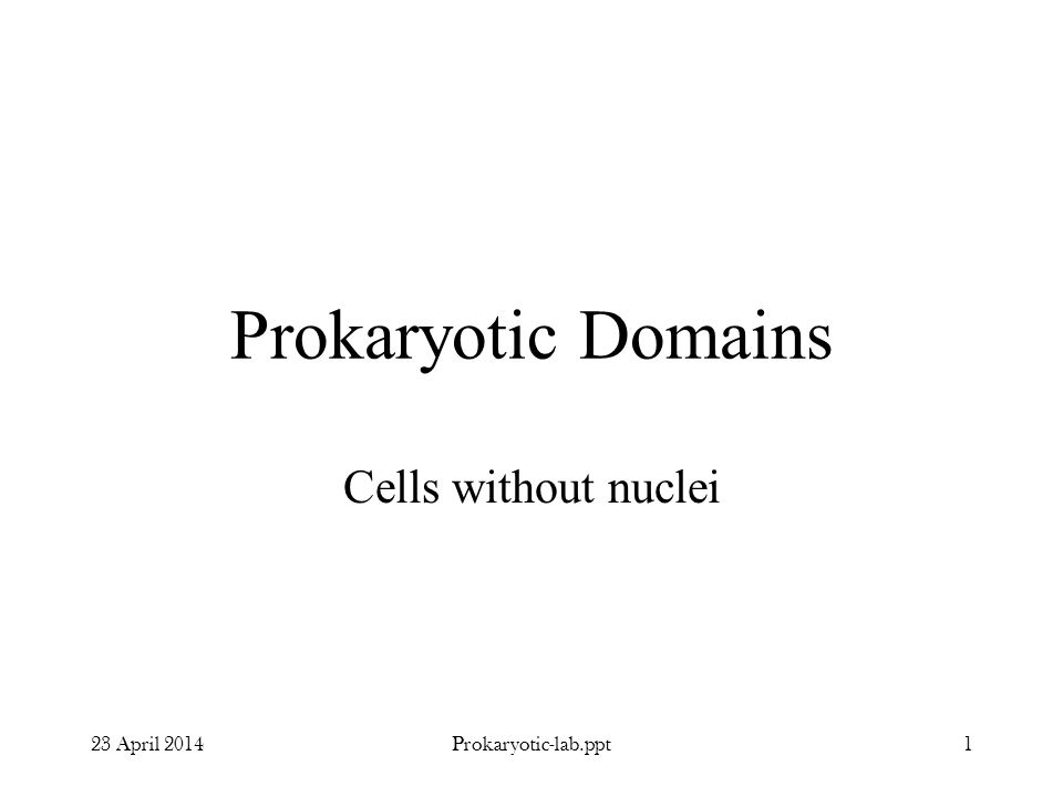 Prokaryotic Domains Cells without nuclei 23 April 20141Prokaryotic-lab.ppt