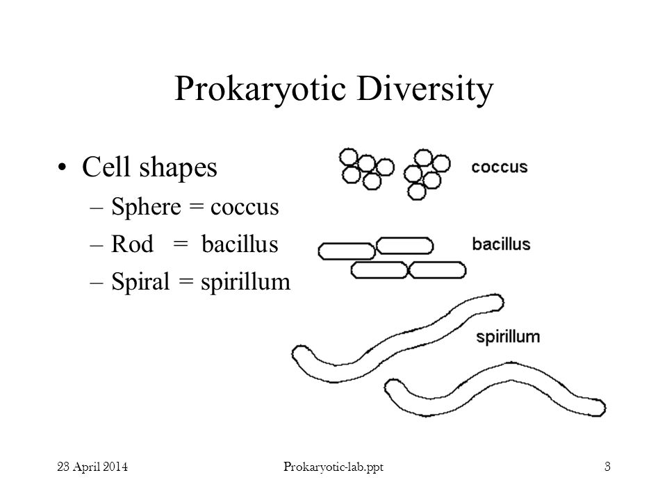 Prokaryotic Diversity 23 April 20143Prokaryotic-lab.ppt Cell shapes –Sphere = coccus –Rod = bacillus –Spiral = spirillum