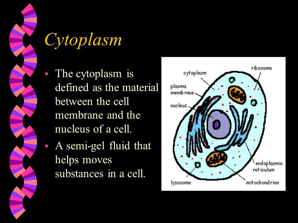 Golgi Apparatus w Golgi bodies are flattened stacks of membrane-bound sacs (looks likes pancakes).