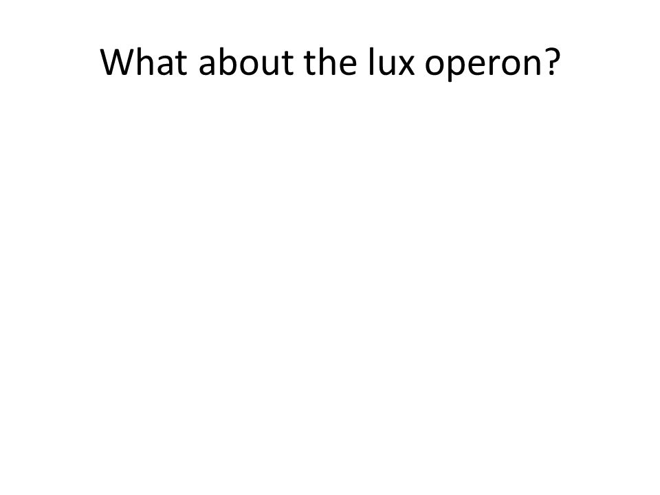 What about the lux operon?