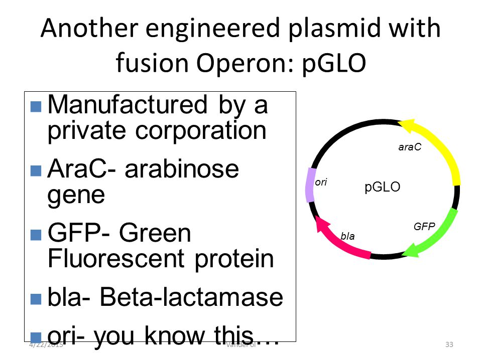 4/22/2015VandePol33 Manufactured by a private corporation AraC- arabinose gene GFP- Green Fluorescent protein bla- Beta-lactamase ori- you know this…
