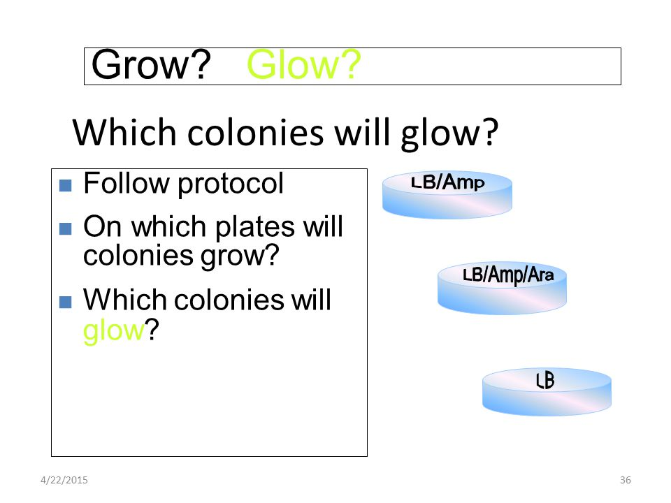 4/22/201536 Grow? Glow? Follow protocol On which plates will colonies grow? Which colonies will glow?
