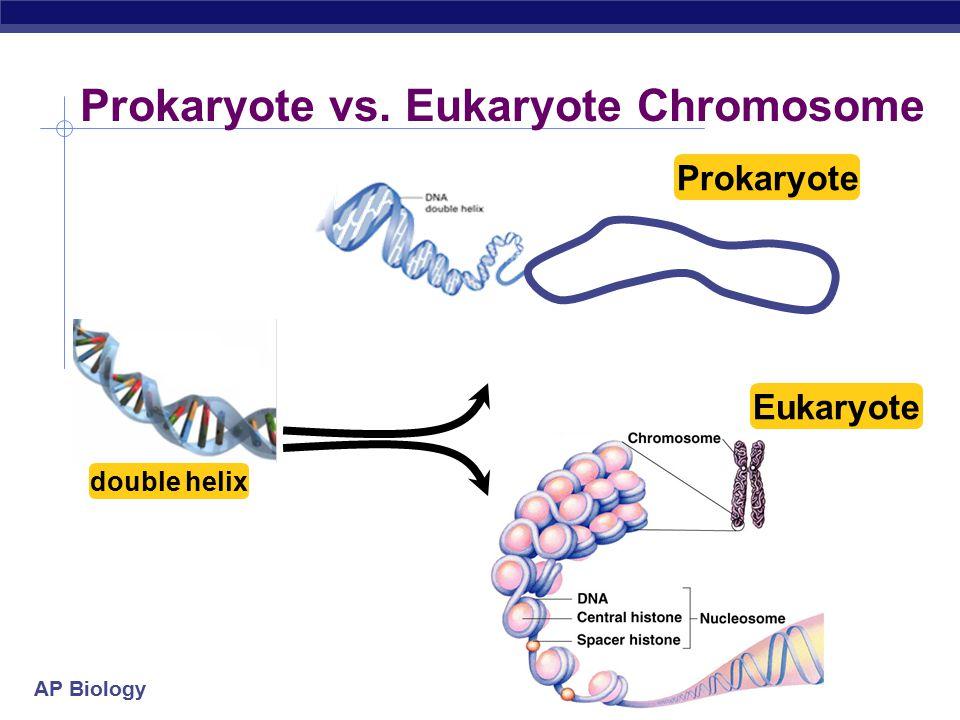 AP Biology Prokaryote vs. Eukaryote Chromosome double helix Prokaryote Eukaryote