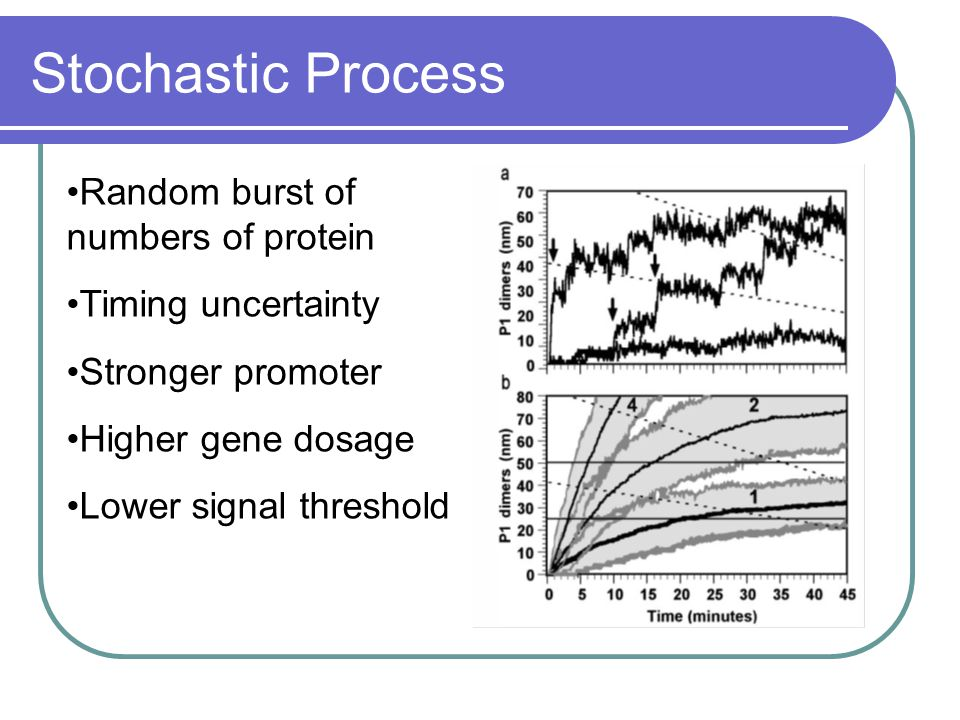 Stochastic Process Random burst of numbers of protein Timing uncertainty Stronger promoter Higher gene dosage Lower signal threshold