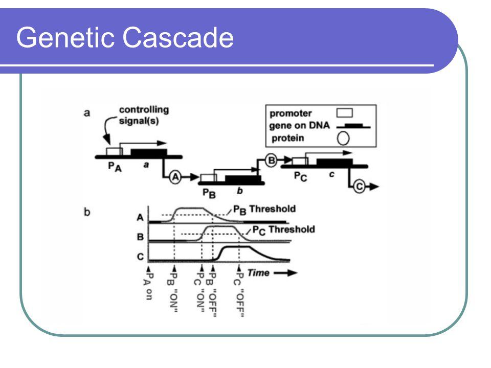 Genetic Cascade