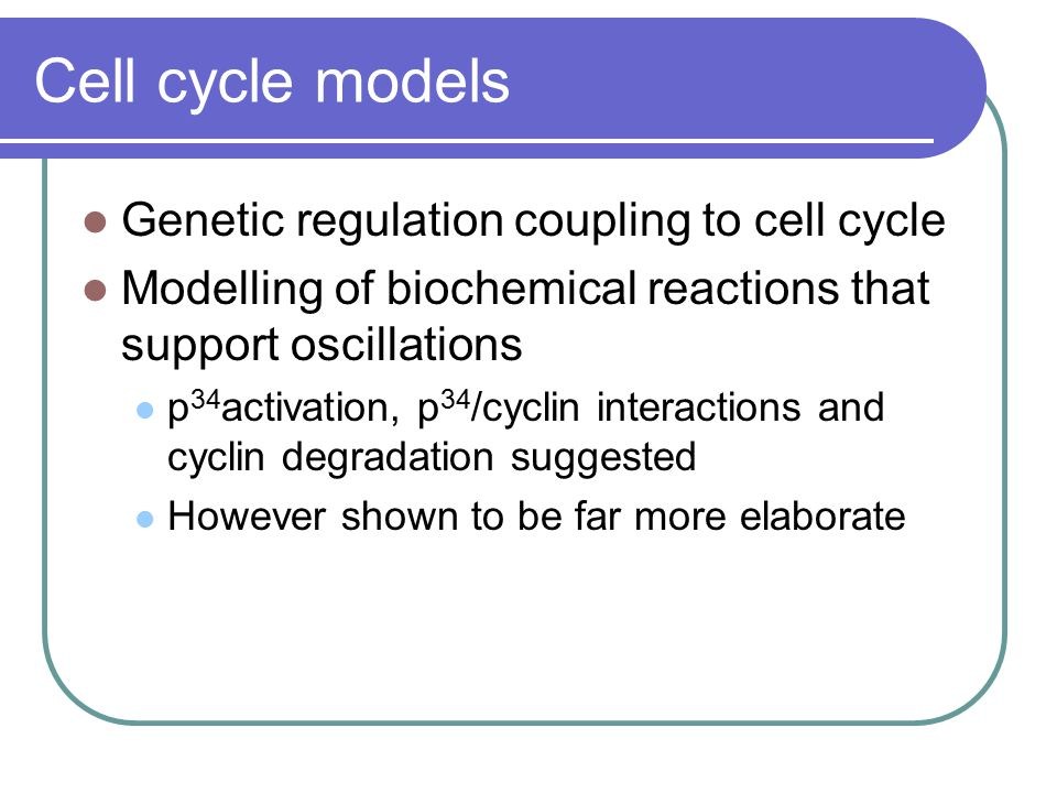 Cell cycle models Genetic regulation coupling to cell cycle Modelling of biochemical reactions that support oscillations p 34 activation, p 34 /cyclin interactions and cyclin degradation suggested However shown to be far more elaborate