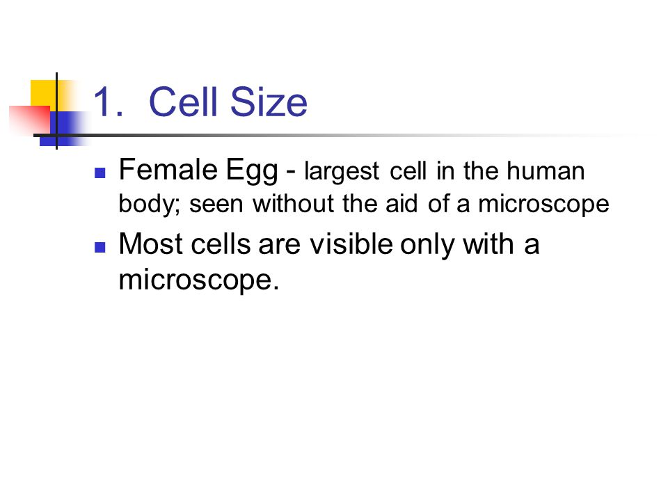 1. Cell Size Female Egg - largest cell in the human body; seen without the aid of a microscope Most cells are visible only with a microscope.