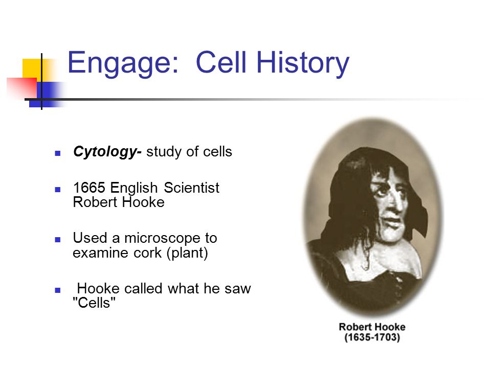 Engage: Cell History Cytology- study of cells 1665 English Scientist Robert Hooke Used a microscope to examine cork (plant) Hooke called what he saw