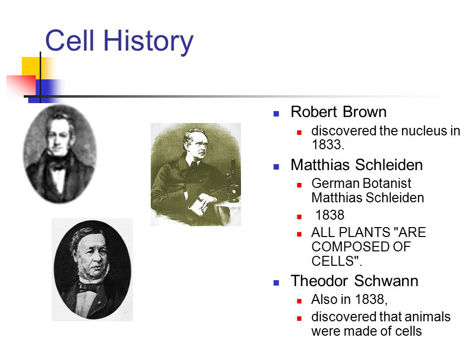 Review A.The Discovery of the Cell 1.Robert Hooke 2.The Cell Theory B.