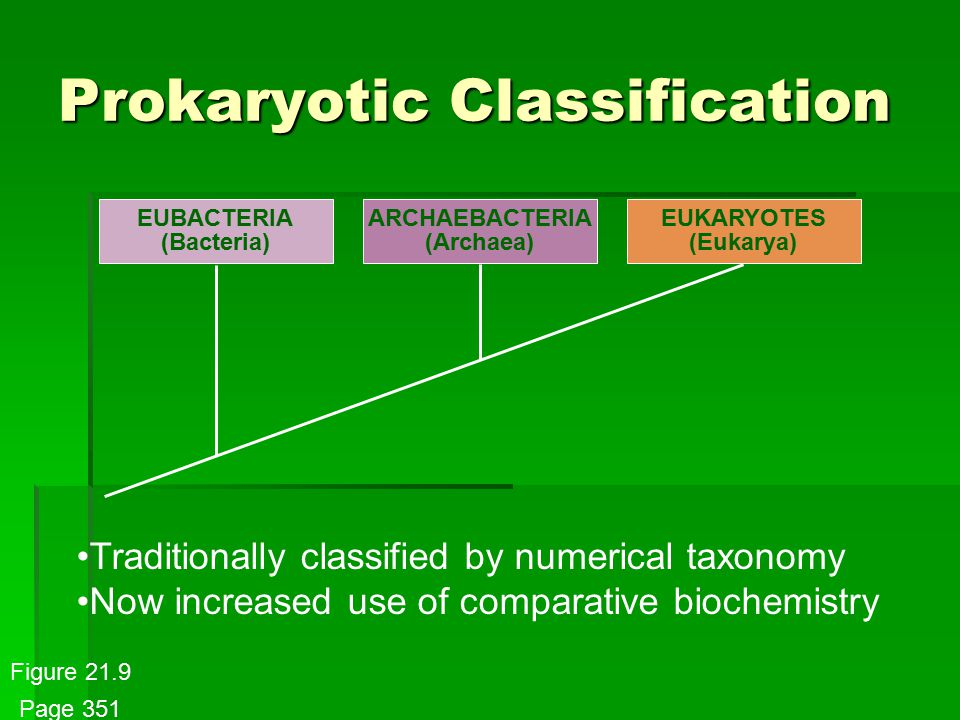 Prokaryotic Classification EUBACTERIA (Bacteria) ARCHAEBACTERIA (Archaea) EUKARYOTES (Eukarya) Traditionally classified by numerical taxonomy Now increased use of comparative biochemistry Figure 21.9 Page 351