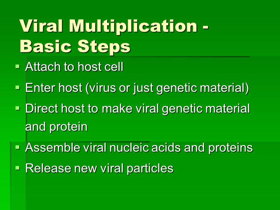 Viral Multiplication - Basic Steps  Attach to host cell  Enter host (virus or just genetic material)  Direct host to make viral genetic material and protein  Assemble viral nucleic acids and proteins  Release new viral particles