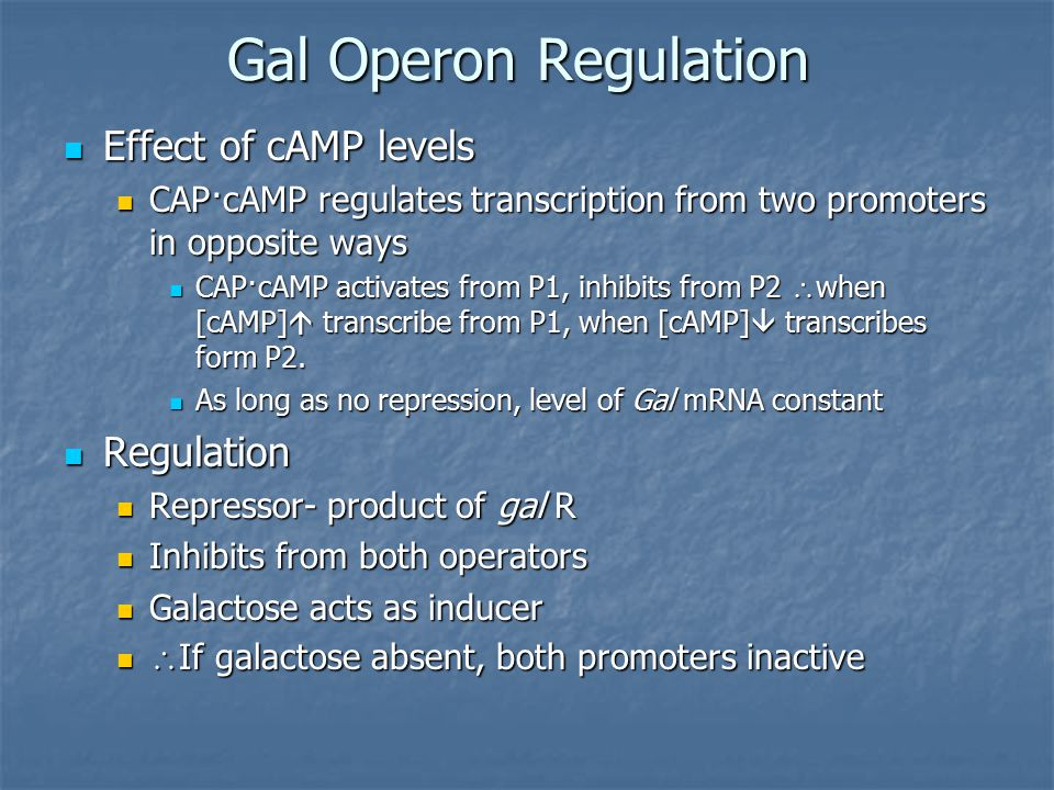 Gal Operon Regulation Effect of cAMP levels Effect of cAMP levels CAP·cAMP regulates transcription from two promoters in opposite ways CAP·cAMP regulates transcription from two promoters in opposite ways CAP·cAMP activates from P1, inhibits from P2  when [cAMP]  transcribe from P1, when [cAMP]  transcribes form P2.