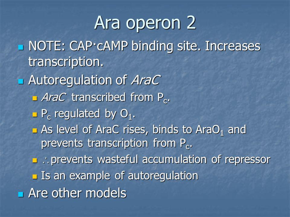 Ara operon 2 NOTE: CAP·cAMP binding site. Increases transcription. NOTE: CAP·cAMP binding site. Increases transcription. Autoregulation of AraC Autore
