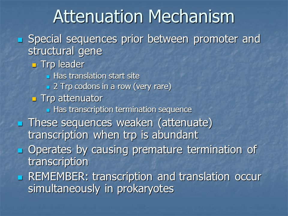 Attenuation Mechanism Special sequences prior between promoter and structural gene Special sequences prior between promoter and structural gene Trp leader Trp leader Has translation start site Has translation start site 2 Trp codons in a row (very rare) 2 Trp codons in a row (very rare) Trp attenuator Trp attenuator Has transcription termination sequence Has transcription termination sequence These sequences weaken (attenuate) transcription when trp is abundant These sequences weaken (attenuate) transcription when trp is abundant Operates by causing premature termination of transcription Operates by causing premature termination of transcription REMEMBER: transcription and translation occur simultaneously in prokaryotes REMEMBER: transcription and translation occur simultaneously in prokaryotes