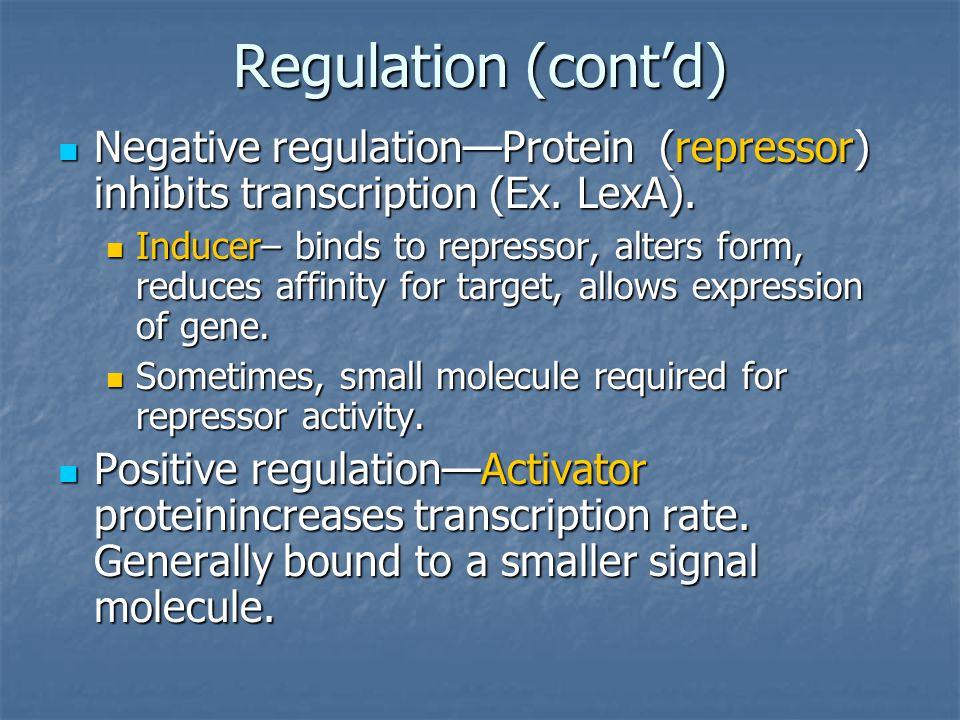 Regulation (cont'd) Negative regulation—Protein (repressor) inhibits transcription (Ex. LexA). Negative regulation—Protein (repressor) inhibits transc