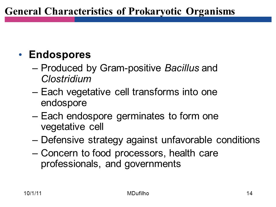 General Characteristics of Prokaryotic Organisms Endospores –Produced by Gram-positive Bacillus and Clostridium –Each vegetative cell transforms into