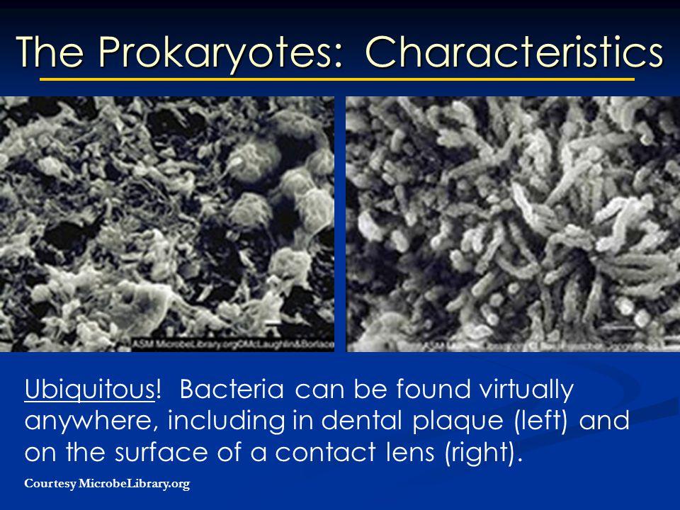 The Prokaryotes: Characteristics Ubiquitous.