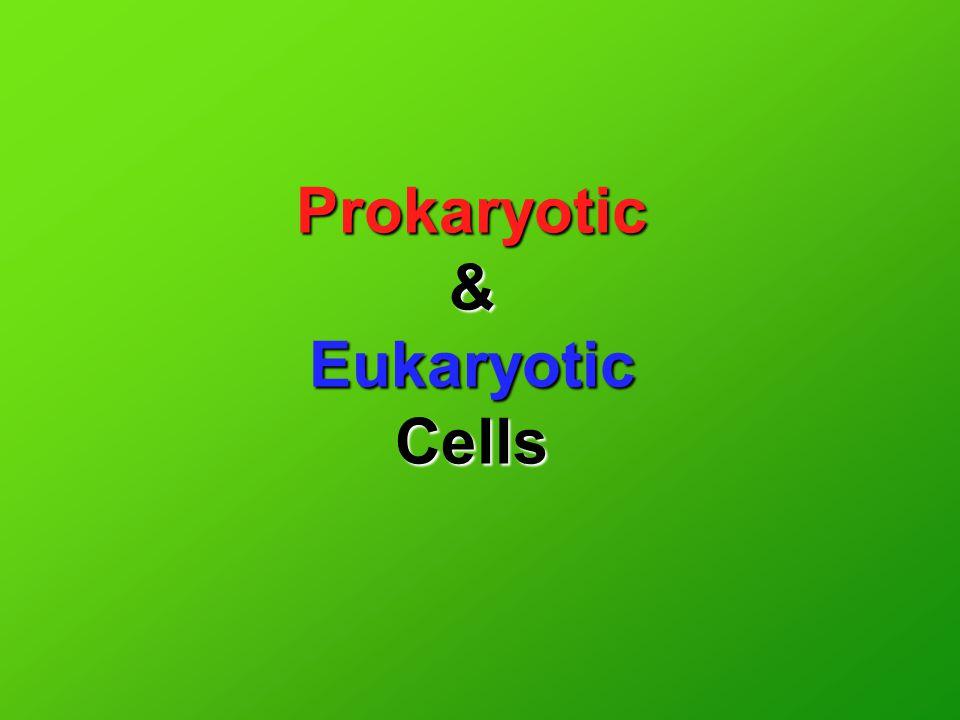 Prokaryotic & Eukaryotic Cells