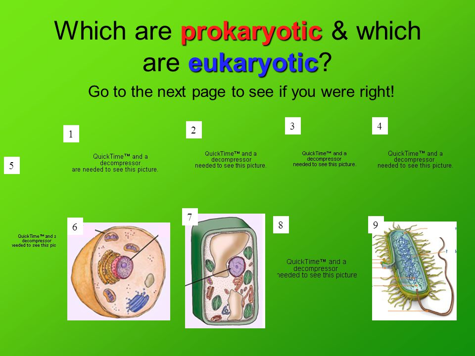 prokaryotic eukaryotic Which are prokaryotic & which are eukaryotic.