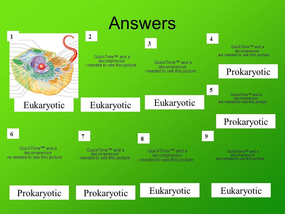 Answers 12 3 4 5 6 7 8 9 Prokaryotic Eukaryotic