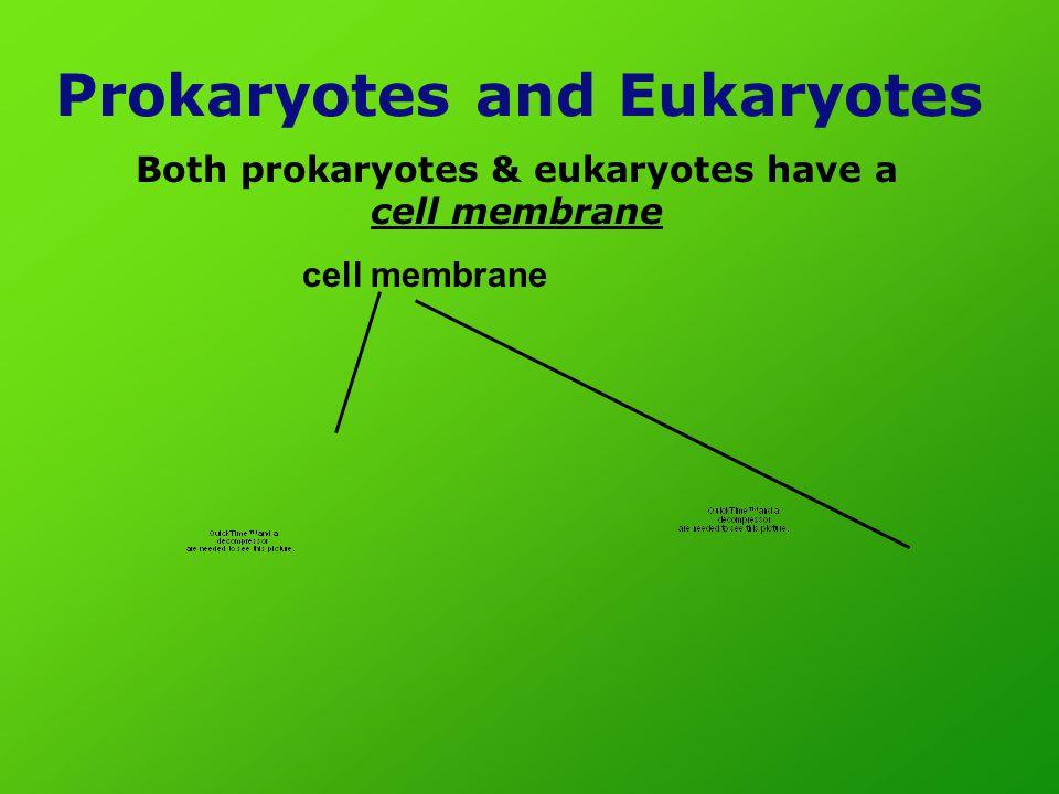 Prokaryotes and Eukaryotes Both prokaryotes & eukaryotes have a cell membrane cell membrane