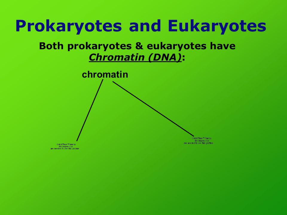 Prokaryotes and Eukaryotes Both prokaryotes & eukaryotes have Chromatin (DNA): chromatin