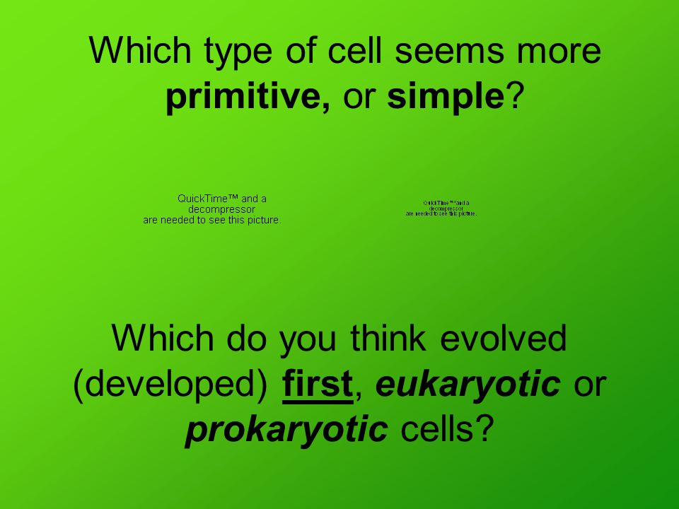 Which do you think evolved (developed) first, eukaryotic or prokaryotic cells.