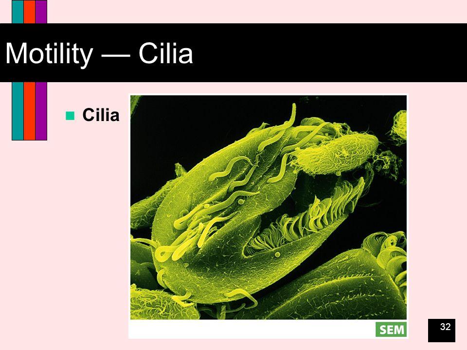 32 Motility — Cilia Cilia