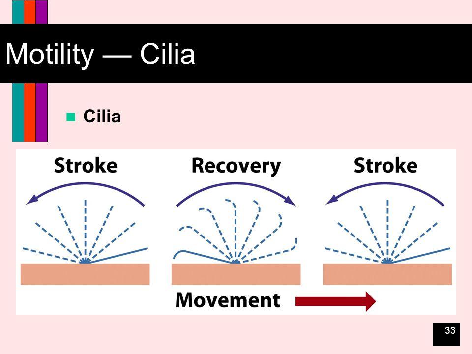 33 Motility — Cilia Cilia