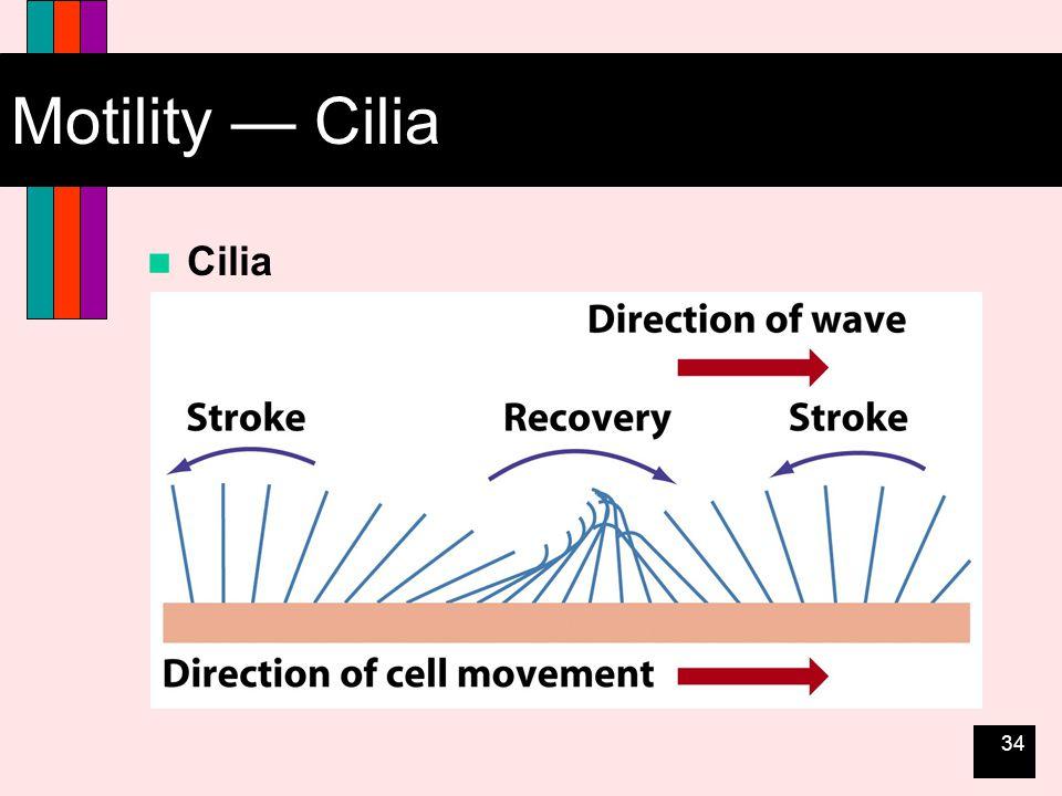 34 Motility — Cilia Cilia