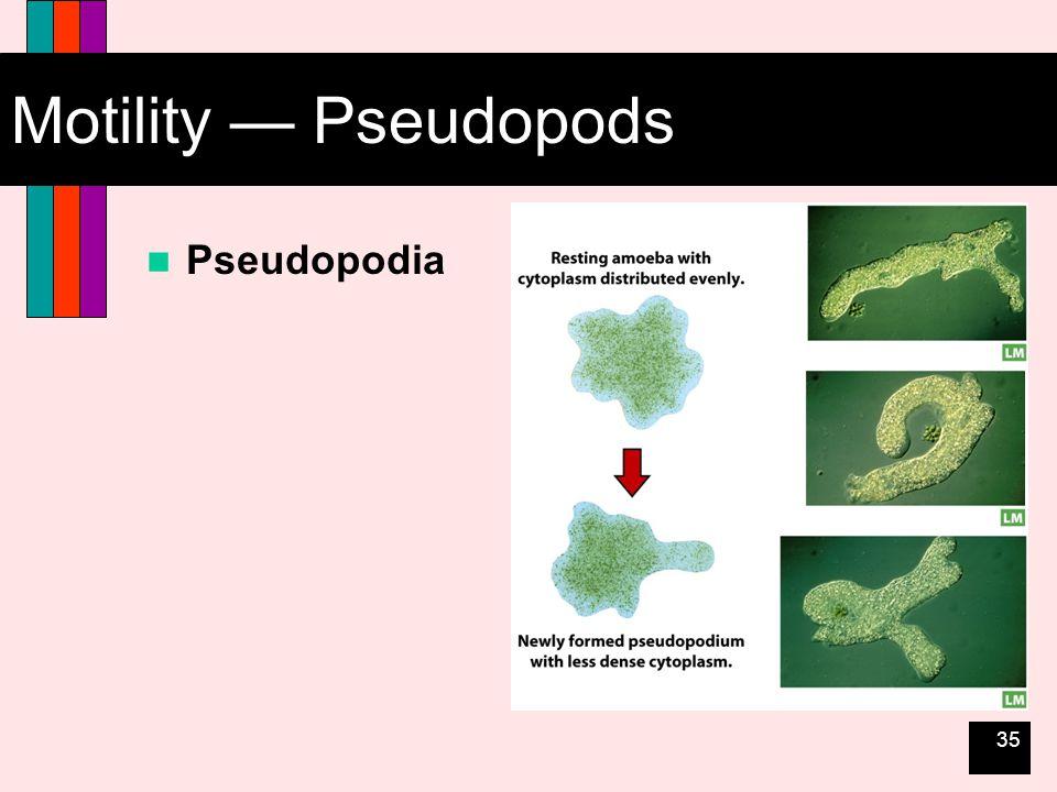 35 Motility — Pseudopods Pseudopodia