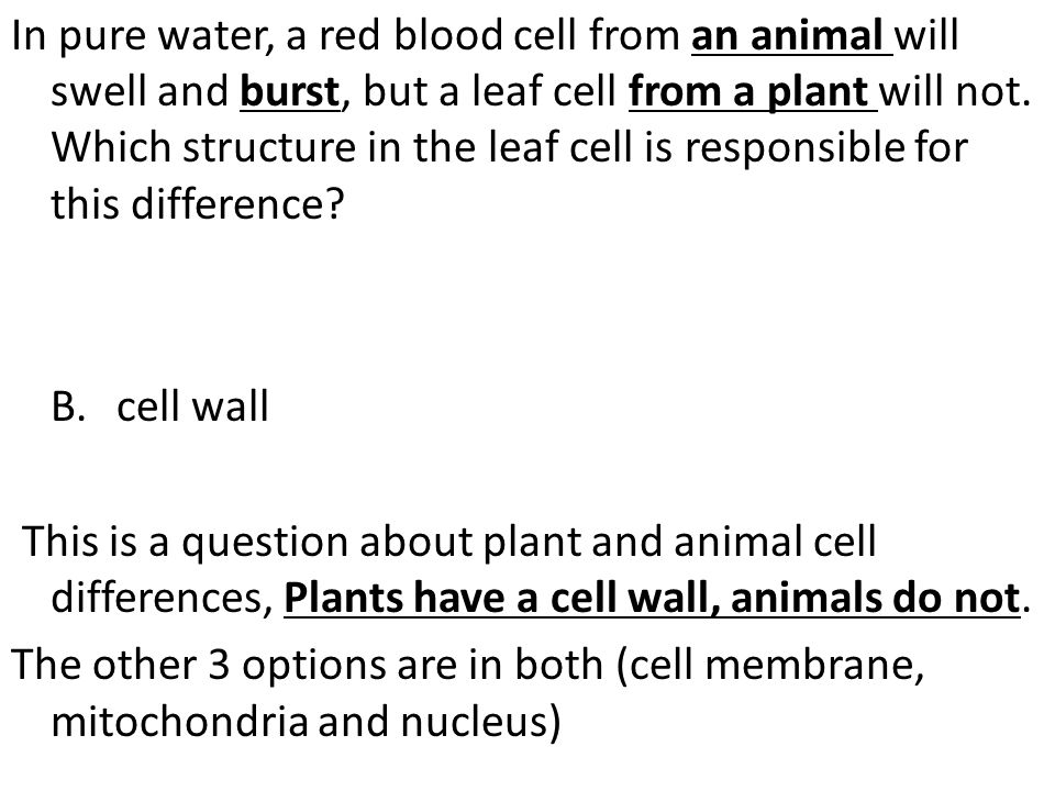 In pure water, a red blood cell from an animal will swell and burst, but a leaf cell from a plant will not. Which structure in the leaf cell is respon